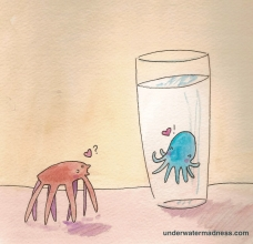 spider and octopus1